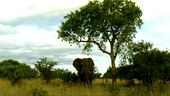 Photo for Africa: Trees of Life