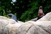 Photo for Bronx Zoo - Tierpark der Superlative