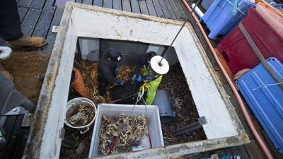 Image from Deadliest Catch: Dungeon Cove