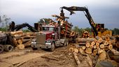 Photo for Swamp Loggers 2