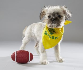 Image from PUPPY BOWL XIII