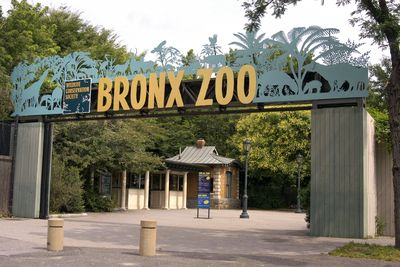 Image from THE ZOO